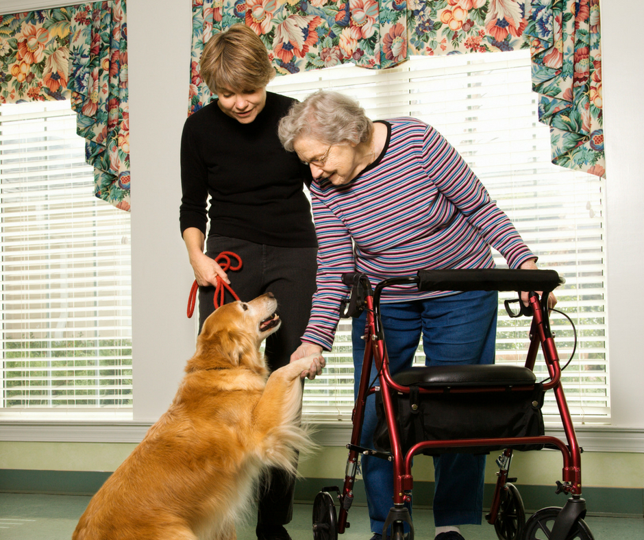 How to Choose a Rollator Walker